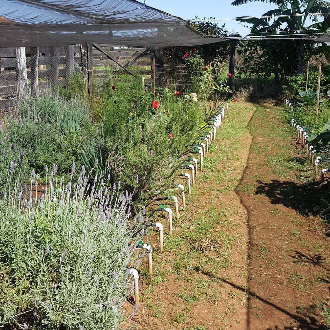 Plataforma online possibilita adotar horta e galinha e receber os alimentos em casa 9