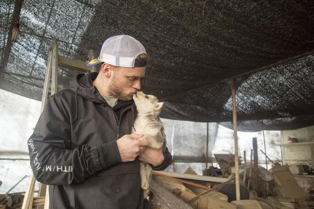 Esquiador e namorado resgatam 90 cães que viviam em fazenda de abate na Coréia do Sul 9