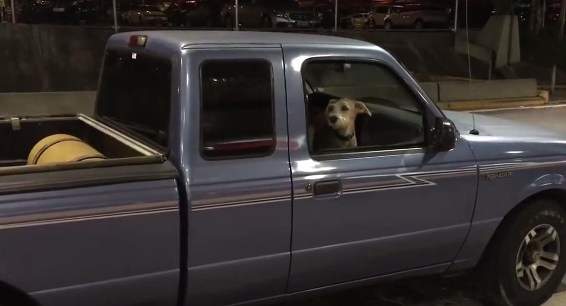 [VÍDEO] Cachorro não se aguenta de felicidade ao ver seu dono voltar de viagem 2