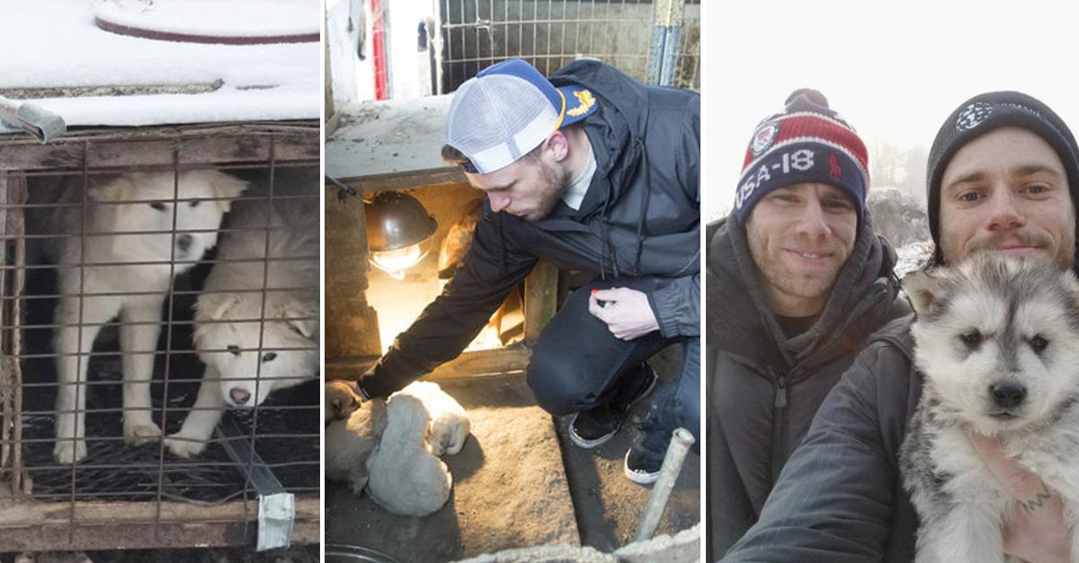 Esquiador e namorado resgatam 90 cães que viviam em fazenda de abate na Coréia do Sul 10