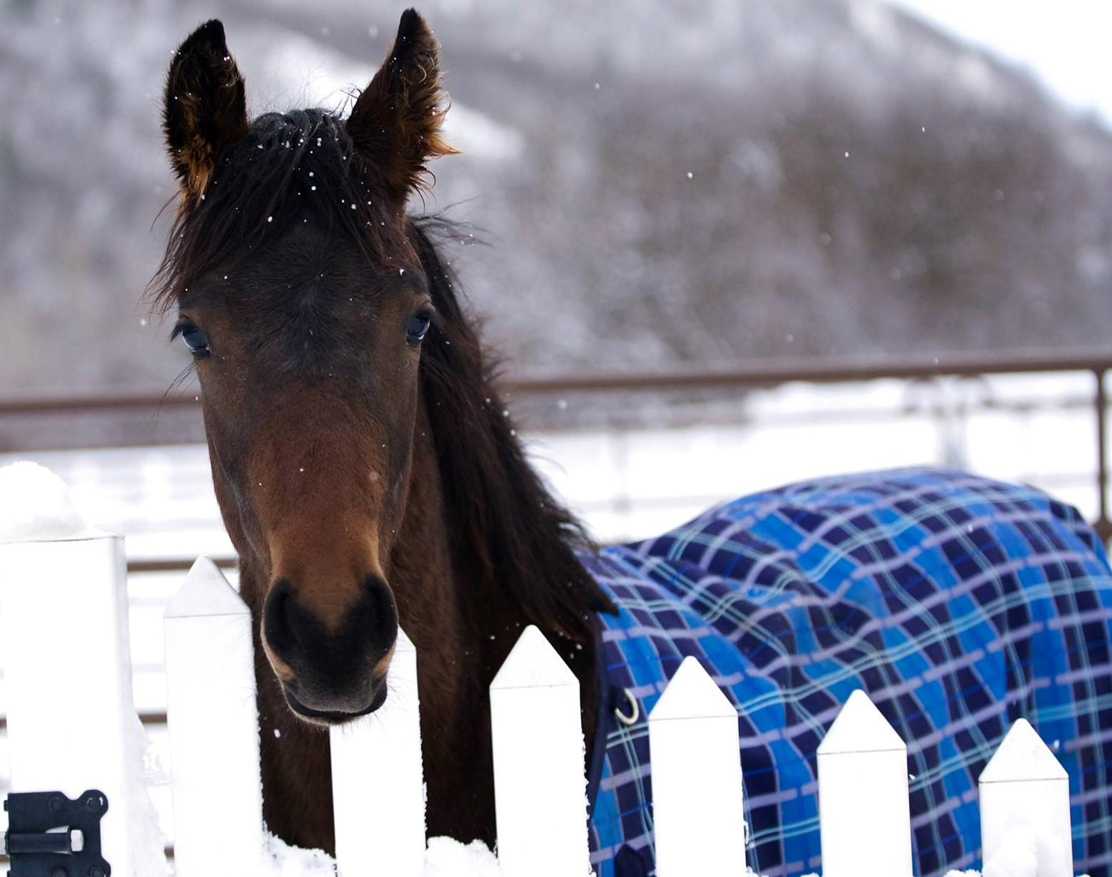 Cavalo de apenas 2 semanas vive espalhando sorrisos e está encantando a internet 4