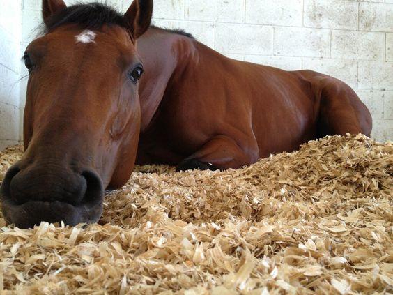 Cavalo de apenas 2 semanas vive espalhando sorrisos e está encantando a internet 5