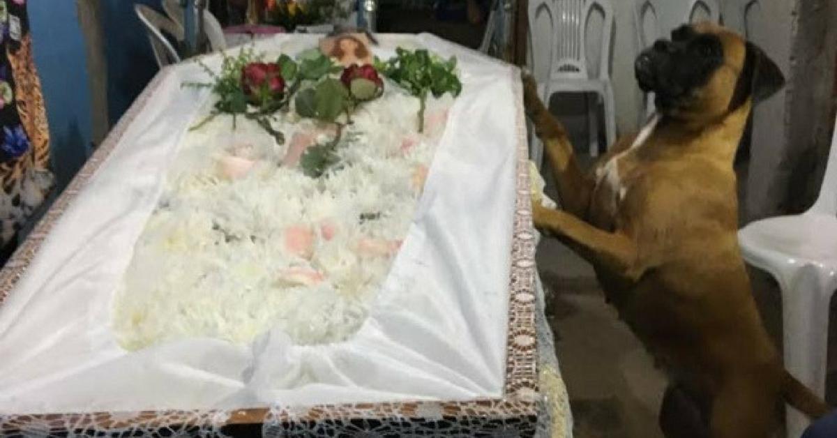 """""""O amor não é exclusivo dos humanos"""": cadela passa velório todo ao lado do caixão da dona 7"""