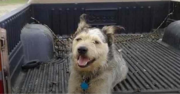 homem com câncer terminal pede pra adotarem seu cão