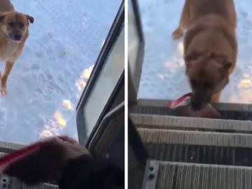 Motorista de ônibus escolar para todos dias no mesmo lugar para alimentar cão abandonado 7