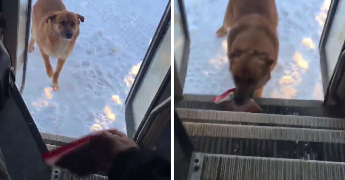 Motorista de ônibus escolar para todos dias no mesmo lugar para alimentar cão abandonado 1