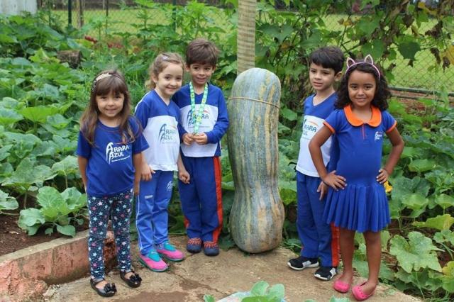 Alunos plantam e colhem abóbora gigante de 50 kg e 1 metro em escola no DF 1