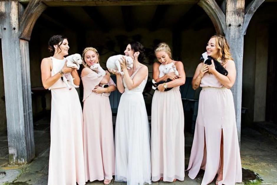 Casal substitui buquê de flores por filhotes para adoção em casamento 11