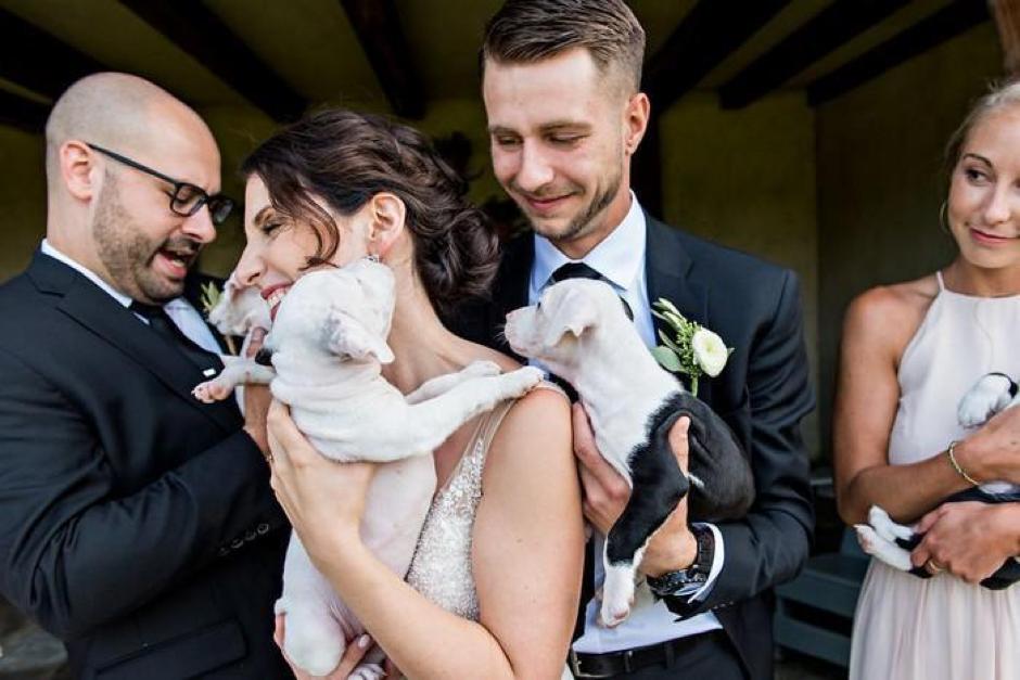 Casal substitui buquê de flores por filhotes para adoção em casamento 12