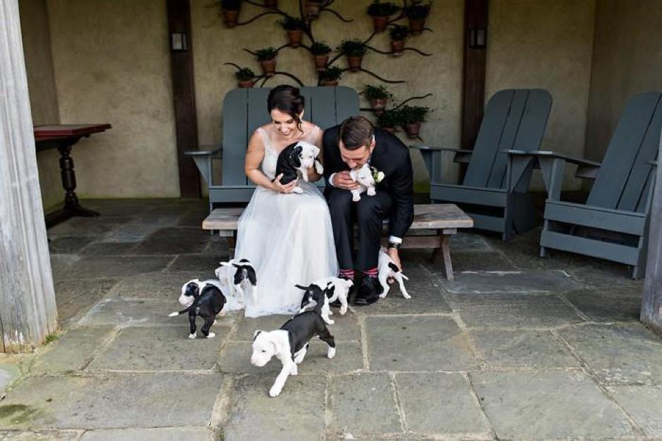 Casal substitui buquê de flores por filhotes para adoção em casamento 14