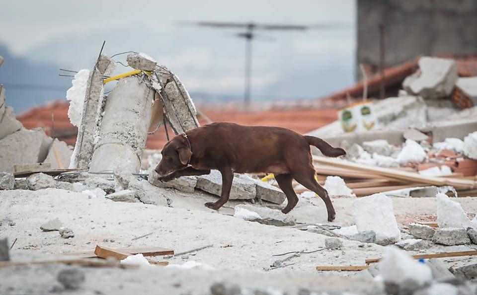 Corpo de Bombeiros faz linda homenagem à cadela falecida que trabalhou 8 anos com eles 9