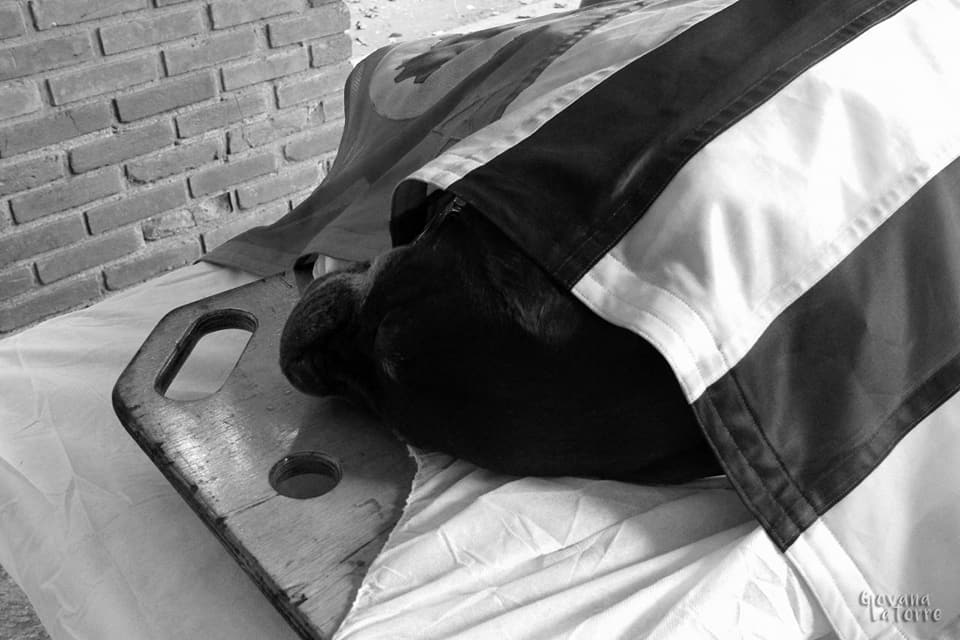 Corpo de Bombeiros faz linda homenagem à cadela falecida que trabalhou 8 anos com eles 8