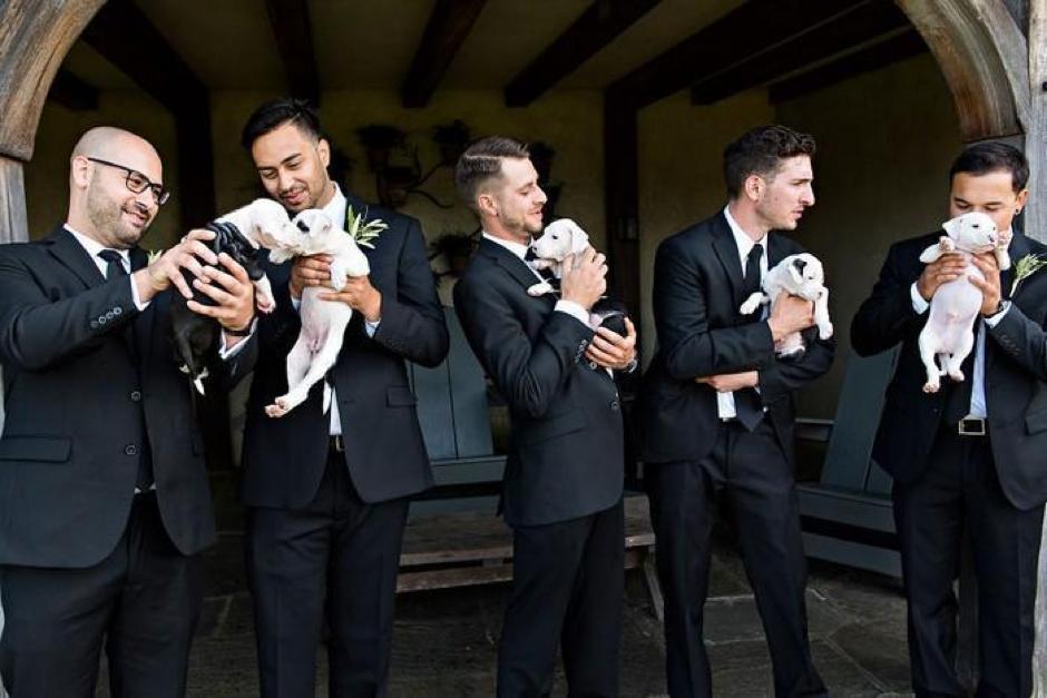 Casal substitui buquê de flores por filhotes para adoção em casamento 3