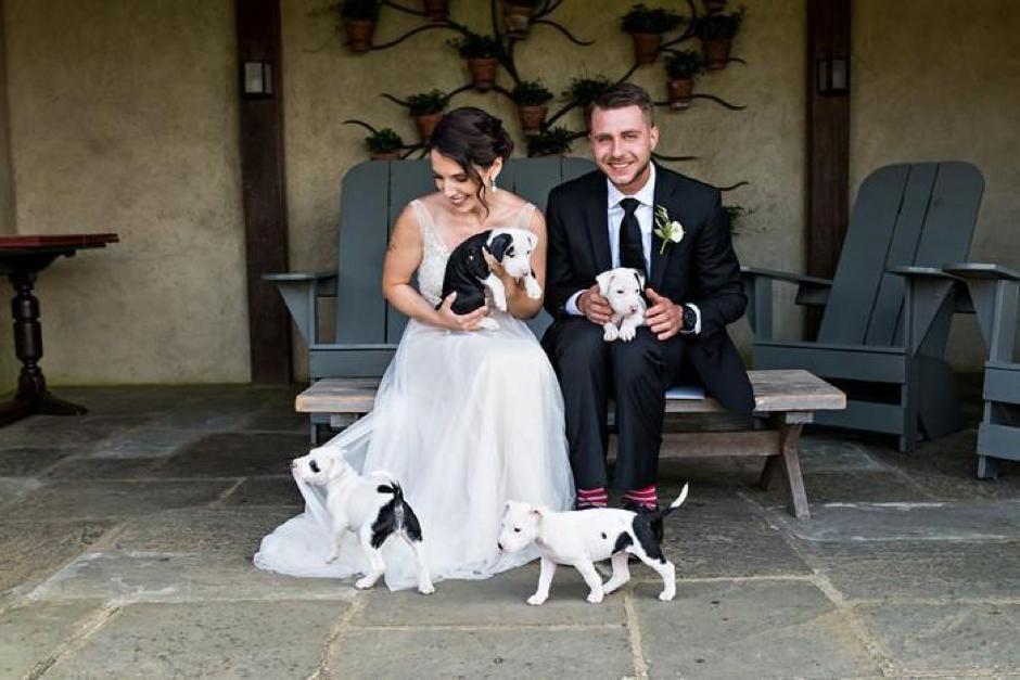 Casal substitui buquê de flores por filhotes para adoção em casamento 4