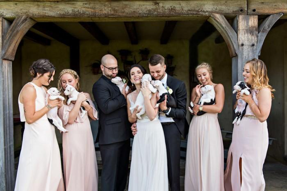 Casal substitui buquê de flores por filhotes para adoção em casamento 6
