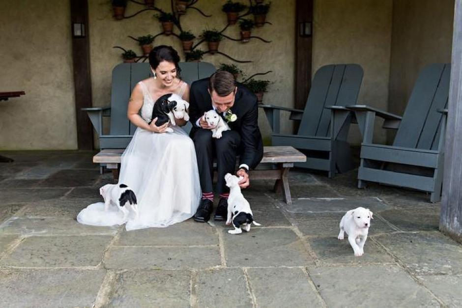 Casal substitui buquê de flores por filhotes para adoção em casamento 8