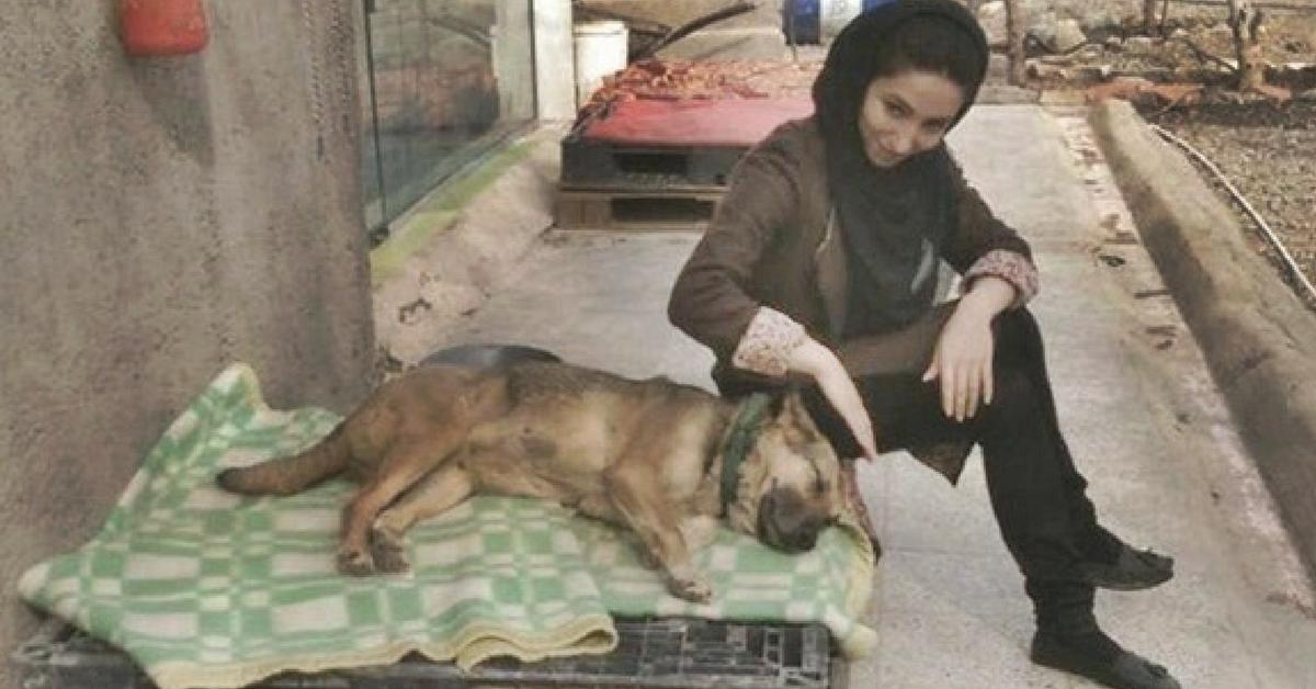 Sem ajuda do governo ela salva cães abandonados e feridos nas ruas do Teerã 5