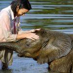 elefante superando medo da água