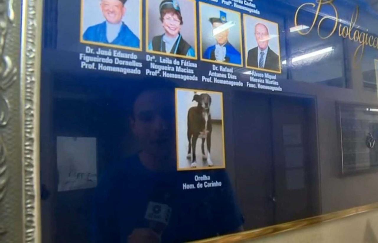 """Universitários homenageiam cão que """"frequentava"""" aulas junto com eles, em Pelotas 1"""