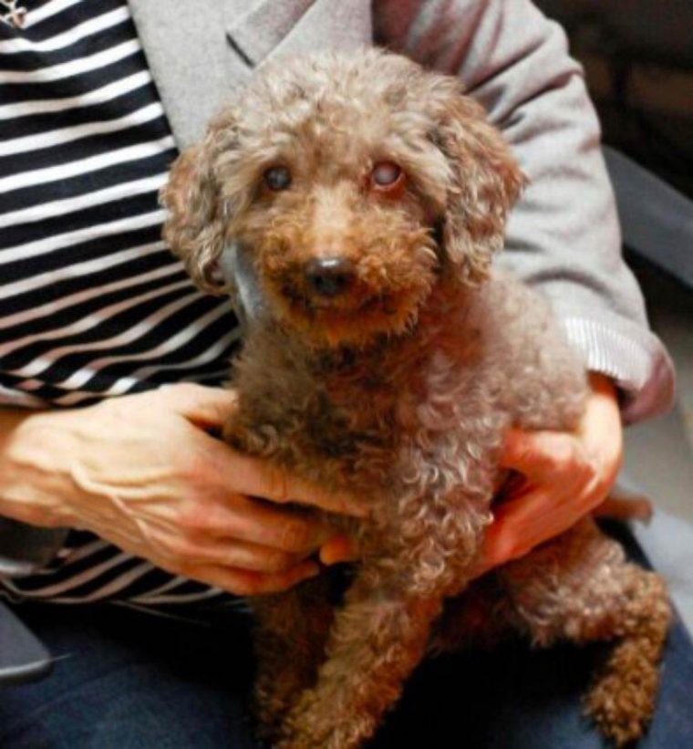 Garoto visita abrigo e adota o cachorro mais velho de todos 1