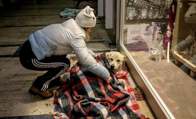 Shopping abriga animais à noite para que não passem frio na rua 2