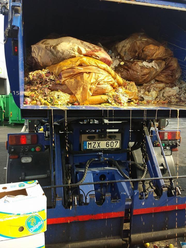 Garis salvam gatinho que estava quase morrendo soterrado debaixo de 5 toneladas de lixo 2