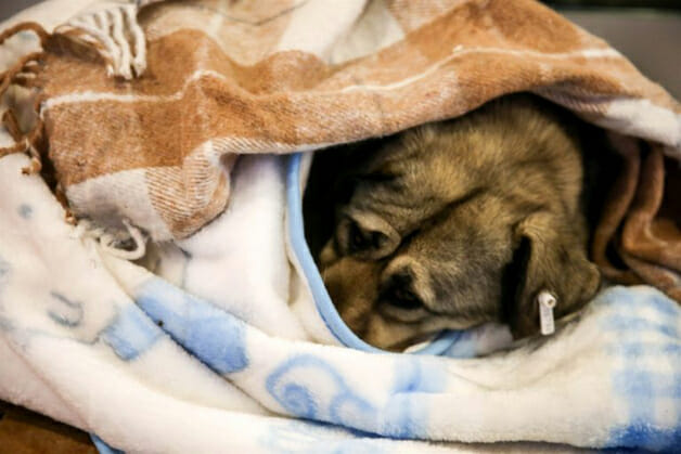 Shopping abriga animais à noite para que não passem frio na rua 3