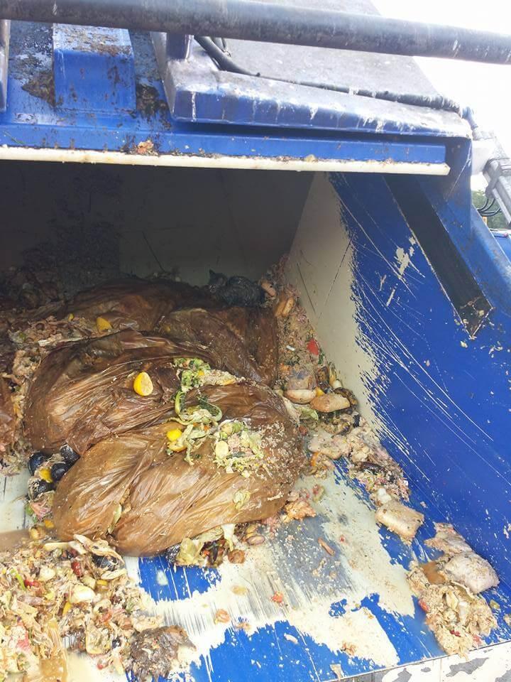 Garis salvam gatinho que estava quase morrendo soterrado debaixo de 5 toneladas de lixo 3