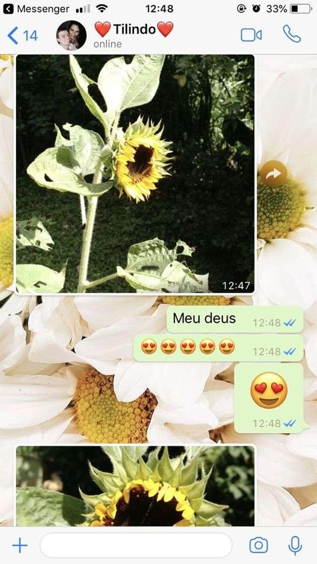 girassóis-fotos-whatsapp