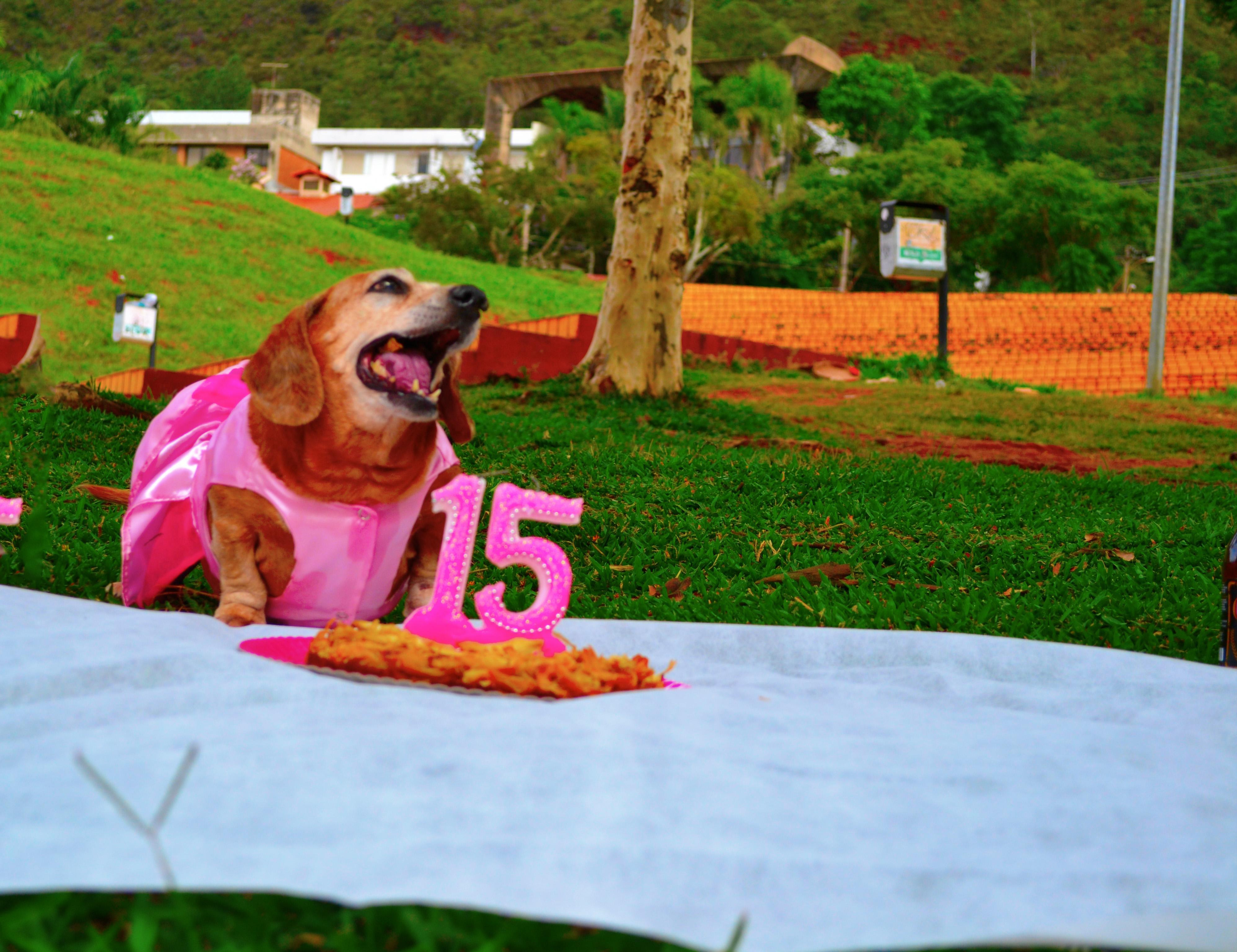 cachorra ganha festa de 15 anos