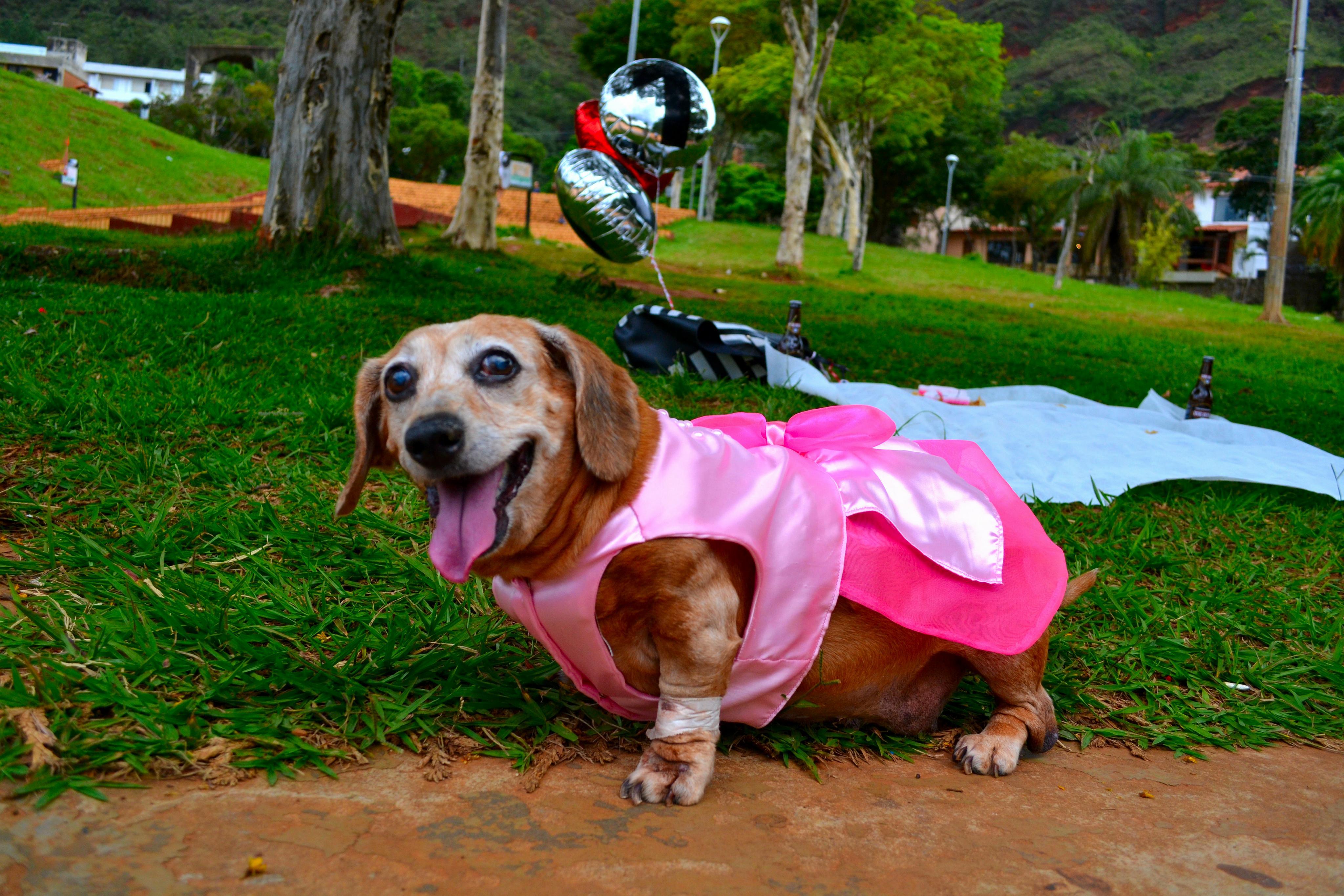 cachorra ganha festa de 15 anos - Fotografia de Patas