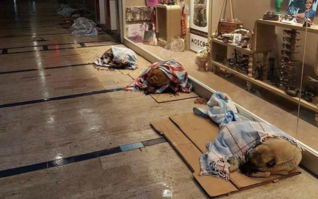 Shopping abriga animais à noite para que não passem frio na rua 4
