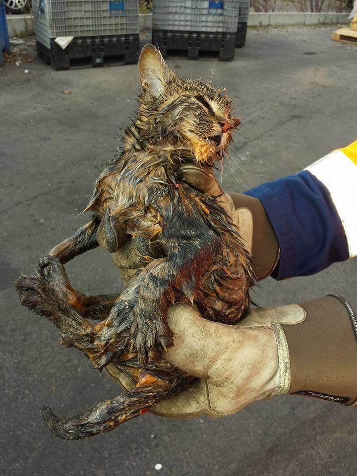 Garis salvam gatinho que estava quase morrendo soterrado debaixo de 5 toneladas de lixo 4