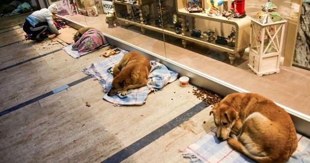 Shopping abriga animais à noite para que não passem frio na rua 5