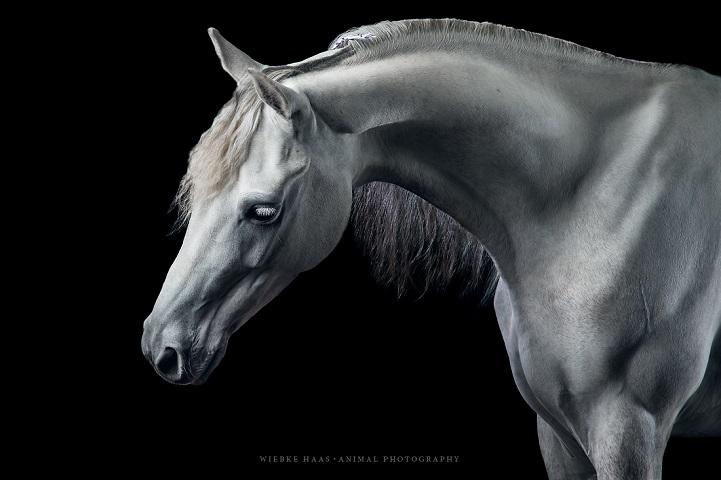Fotógrafo alemão captura a beleza e força dos cavalos selvagens em poderoso ensaio 6