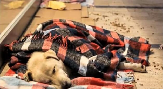 Shopping abriga animais à noite para que não passem frio na rua 6