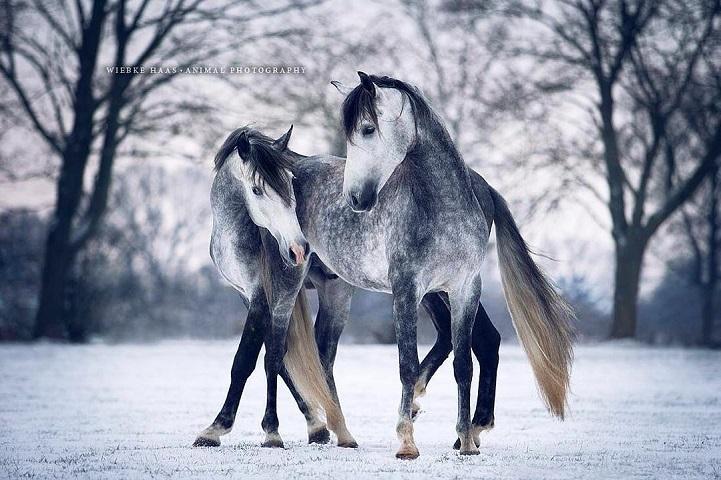 Fotógrafo alemão captura a beleza e força dos cavalos selvagens em poderoso ensaio 8
