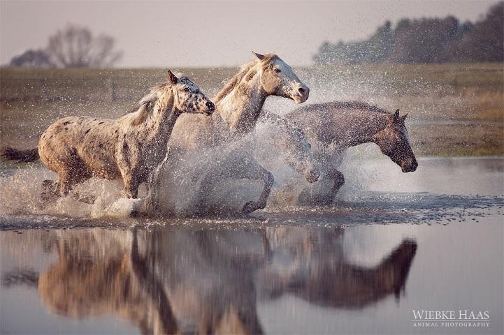 Fotógrafo alemão captura a beleza e força dos cavalos selvagens em poderoso ensaio 9