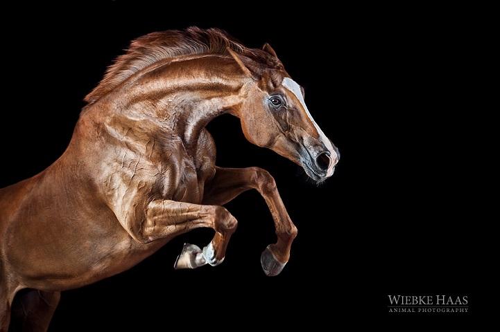 Fotógrafo alemão captura a beleza e força dos cavalos selvagens em poderoso ensaio 11