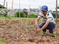 agricultura sustentável Daniel querino