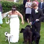 Cachorro faz xixi no vestido da noiva