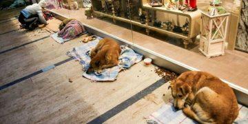 animais shopping stambul
