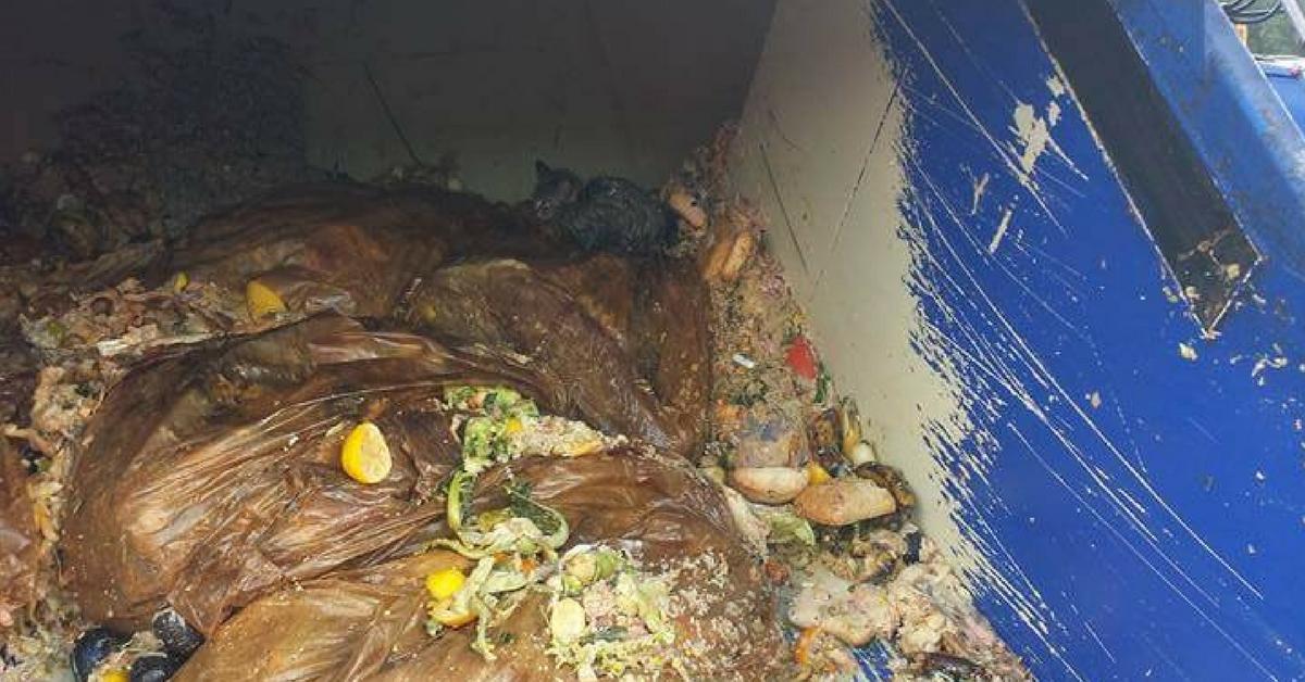 Garis salvam gatinho que estava quase morrendo soterrado debaixo de 5 toneladas de lixo 1