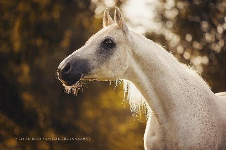 Fotógrafo alemão captura a beleza e força dos cavalos selvagens em poderoso ensaio 12