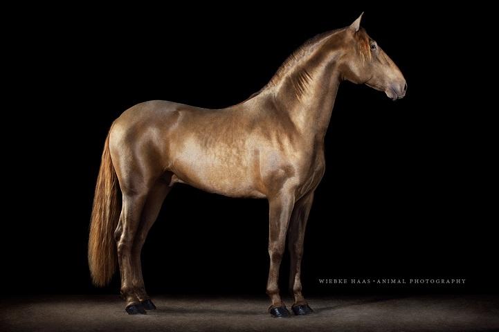 Fotógrafo alemão captura a beleza e força dos cavalos selvagens em poderoso ensaio 13