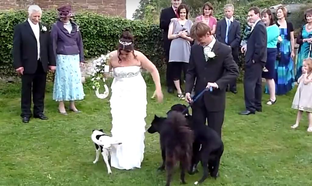 cachorro xixi vestido da noiva
