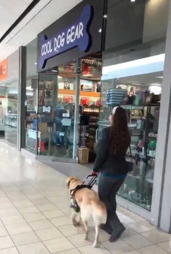 Cão-guia leva dona a Pet Shop toda vez que vão em Shopping 2
