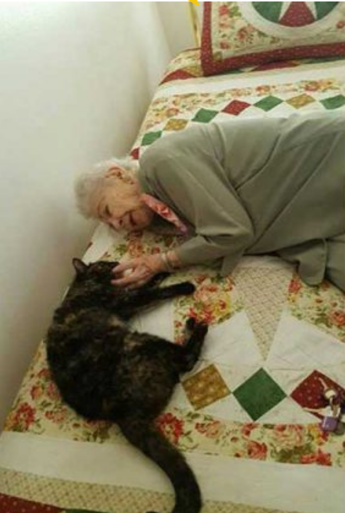 Idosa completa 103 anos e pede pra adotar gatinho de aniversário 6