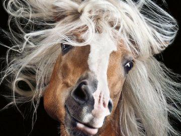 Fotógrafo alemão captura a beleza e força dos cavalos selvagens em poderoso ensaio 2