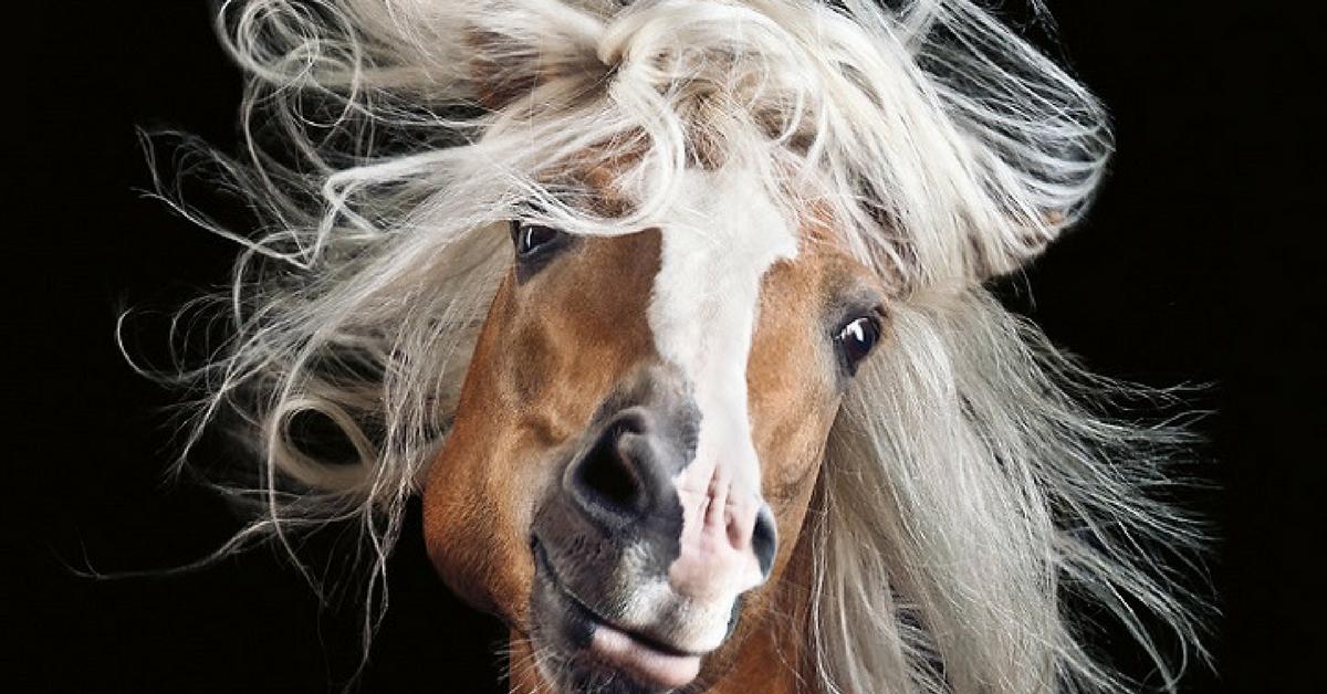 Fotógrafo alemão captura a beleza e força dos cavalos selvagens em poderoso ensaio 1